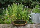 10 ting du IKKE skal gøre i haven netop nu